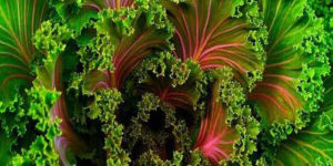 "Novo estudo indica que ""mais plantas, menos carne, menos diabetes"""