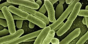Bactéria multirresistente é detectada fora de hospitais brasileiros