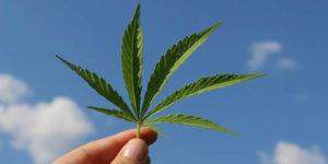 Anvisa aprova registro e produção de derivados de cannabis; plantio é rejeitado